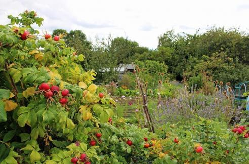 Ripe and mellow fruitfulness: a bright and bounteous crop