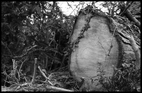 Tree trunk on Knighton Park Road, Clarendon Park, Leicester